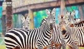 湖州龙之梦乐园三日游,含动物世界,图影湿地门票,住龙之梦雅仕酒店!带着宝宝一起去和萌物见面吧!