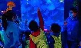 8.12-14【海洋馆天赋探索3日营】小小讲解员PLUS版来啦~这个暑期走进蔚蓝海底,邂逅神奇的海洋生物