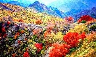 周末1日 喇叭沟门 穿越原始森林の走进五彩斑斓童话世界-探寻北京秋色