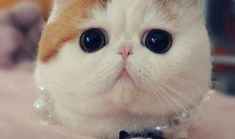 周末,一起去撸猫,认识新朋友(苏州活动)